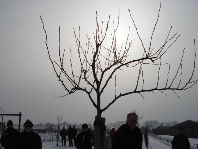 Sienis-2010-8
